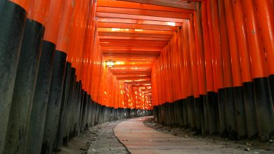 Photo of Explore Fushimi Inari