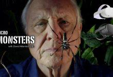 "Photo of Los ""Micro Monsters"" de David Attenborough llegan a Oculus TV"