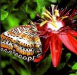 Micro Monsters David Attenborough Mariposa