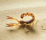 Micro Monsters David Attenborough scorpion